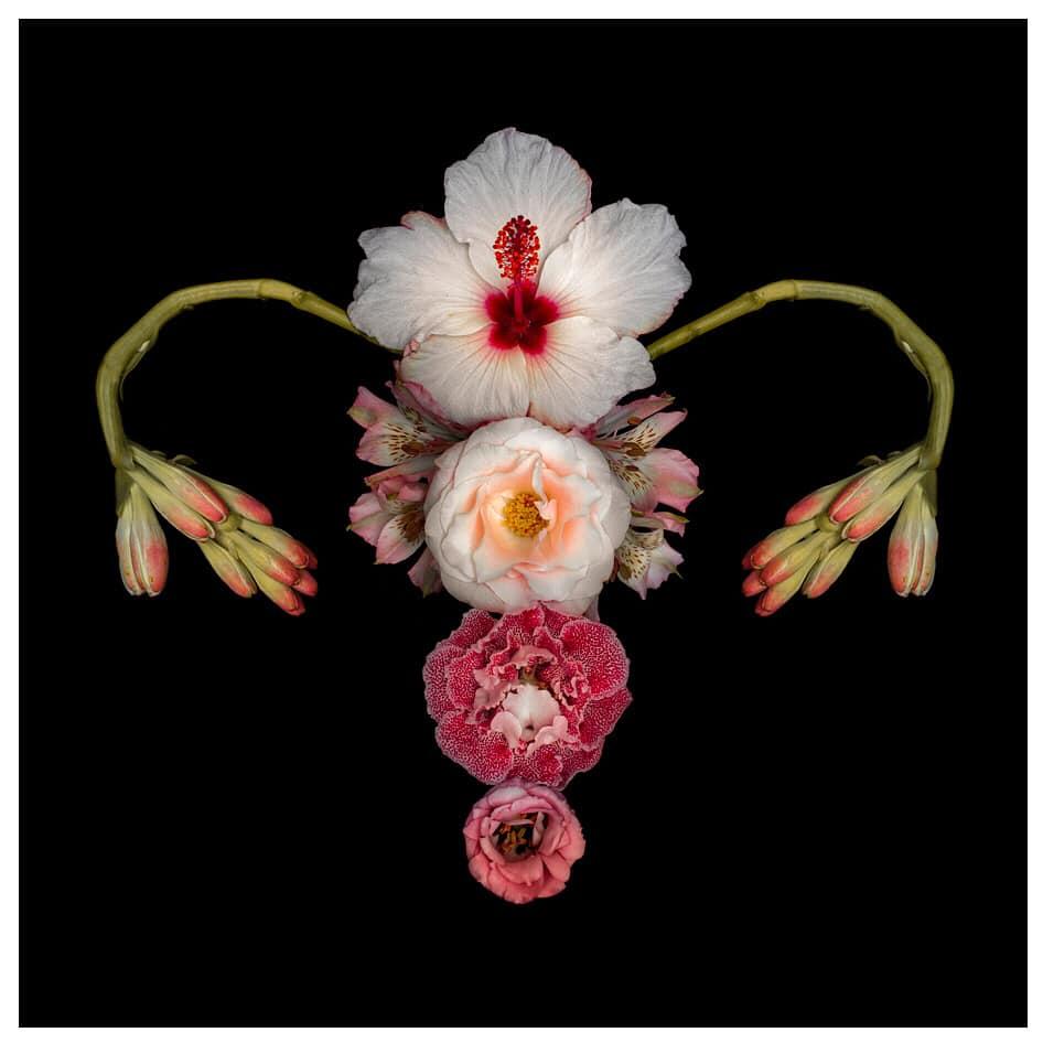 Flower Uterus by Catharina Suleiman